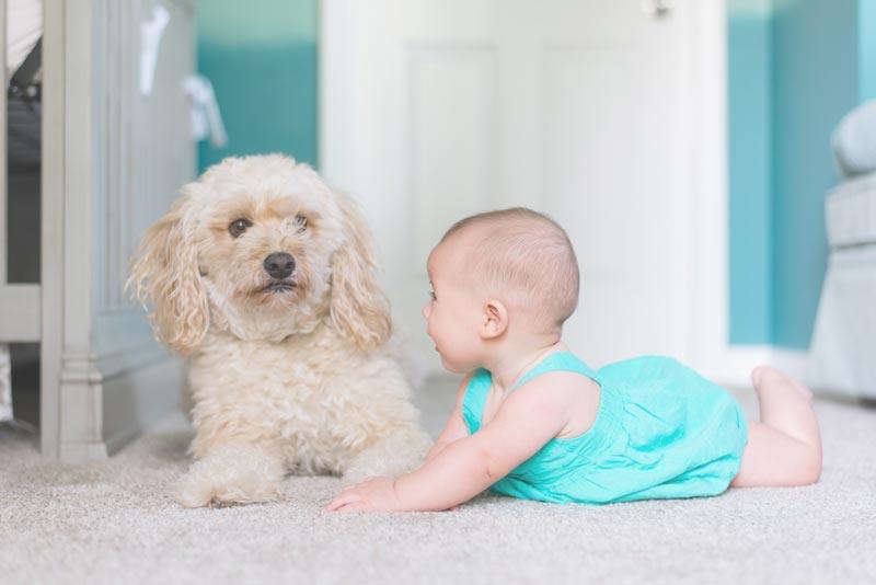 Bebés y mascotas en casa – Todo lo que debes saber