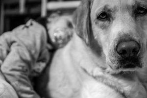 bebés y perros en casa